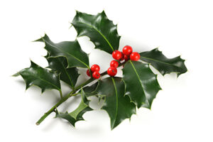 ACET Holly